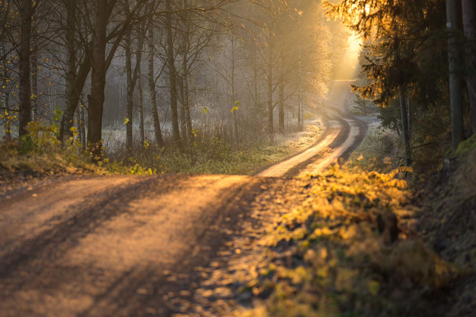 Forest road in the morning in Sipoo